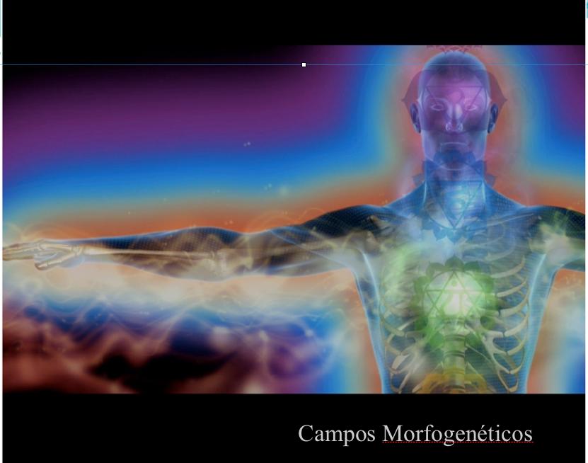 Campos morfogenéticos